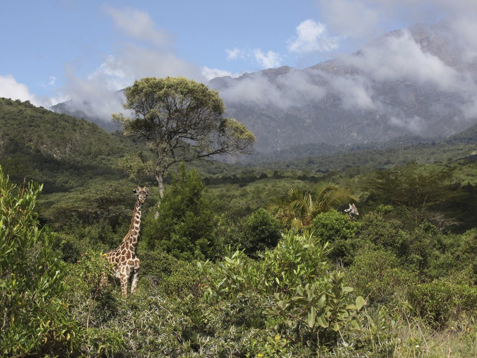 Танзания