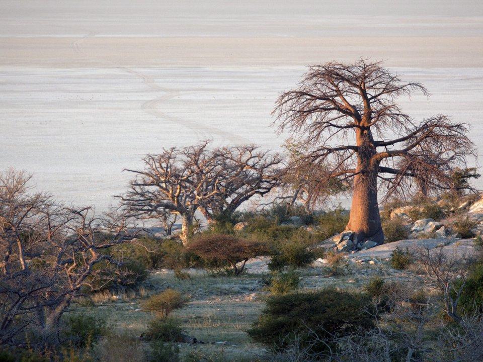 Ботсвана