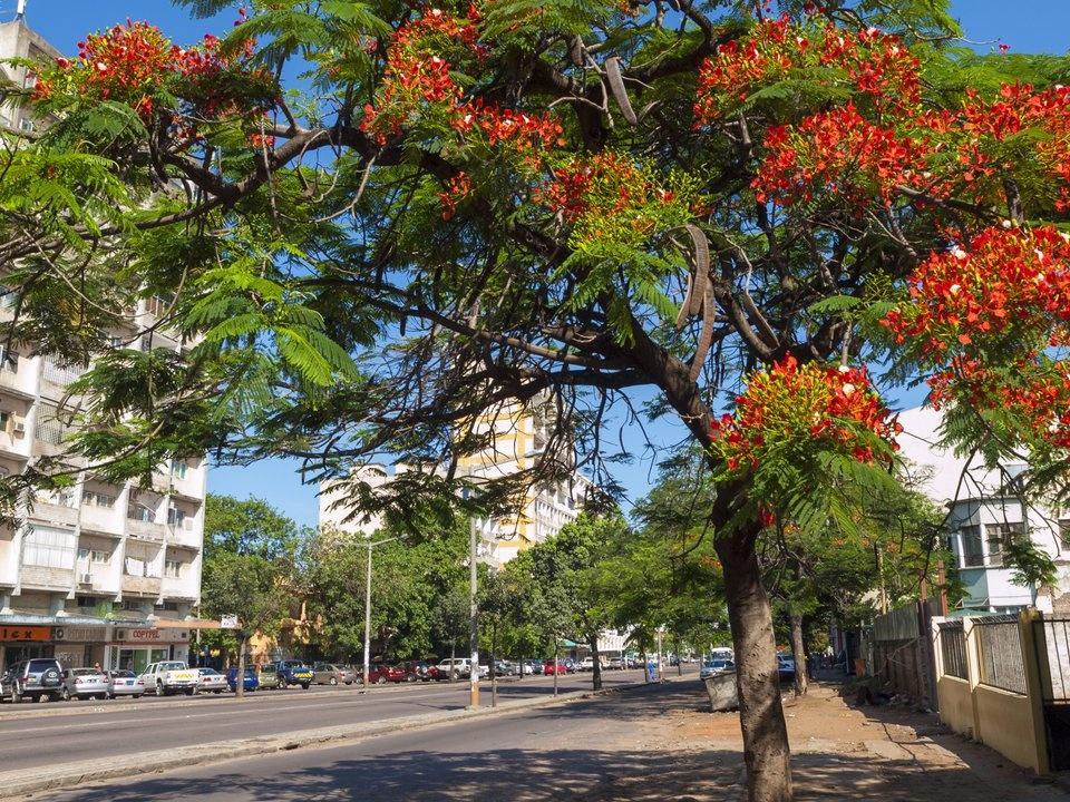 Мозамбик