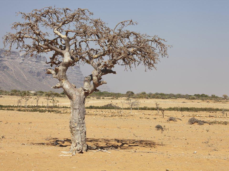 Mali hotel search on site